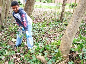 Youth pulling ivy