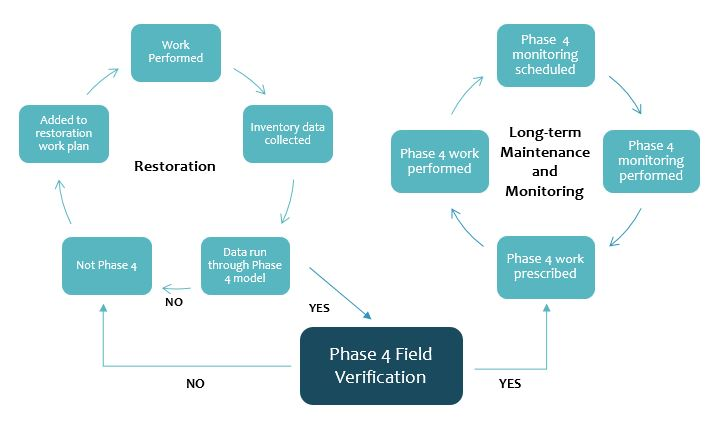 Phase 4 Process