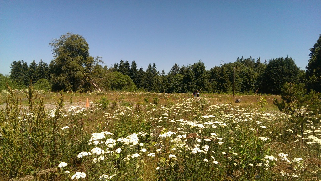 A challenging restoration site in Discovery Park is on top of reclaimed concrete, and exposed to the sun.