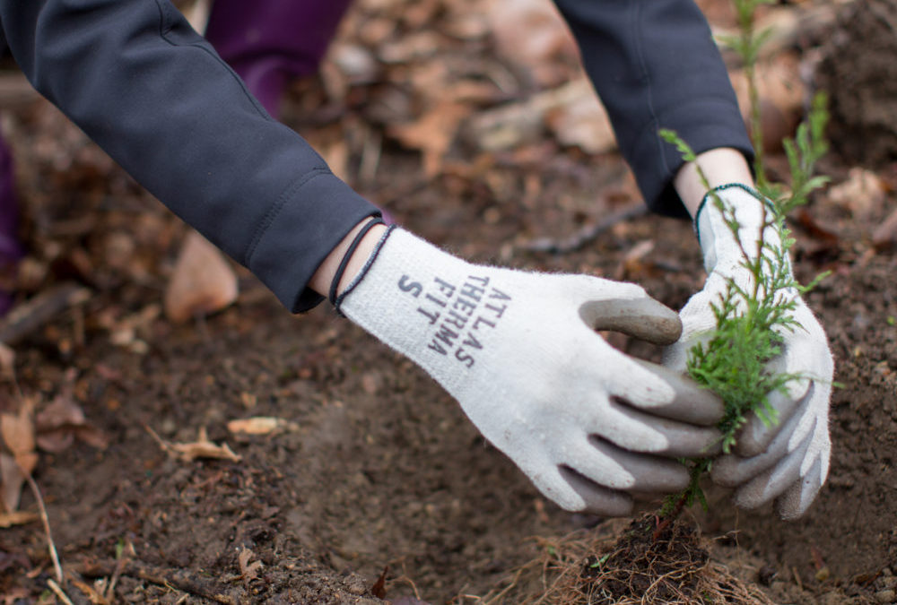 Celebrate Earth Day with Green Seattle!