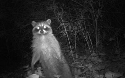 Seattle U lab studies wildlife responses to urban land use