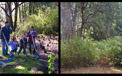 My First Green Seattle Day – Taking a Look Back on Our Forests