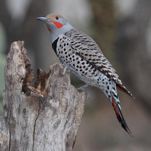 Flickers, wetlands, and trees: Our new restoration sites benefit entire urban havens