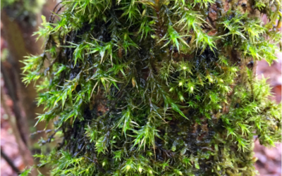 Metals in our Moss? Ecological study gives insights into urban pollution