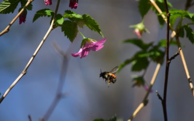 The Native Pollinator Habitat Restoration Guide