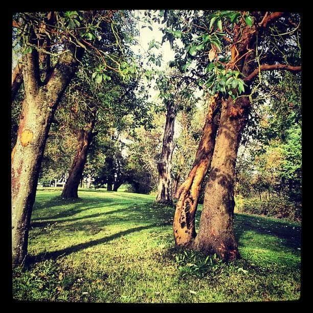Madrone is 1st Western tree on TreeSnap app