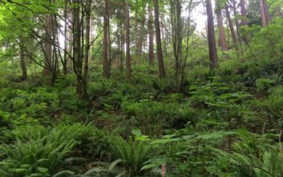 From Twigs to Trees: Baby Plants Grow into Forests