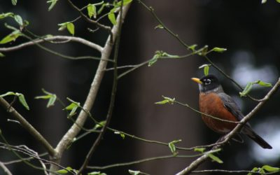 Five Things You Can Do to Protect Seattle's Resident Birds