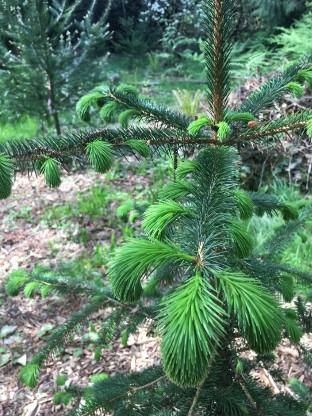 Successful Seedlings in Seattle Parks