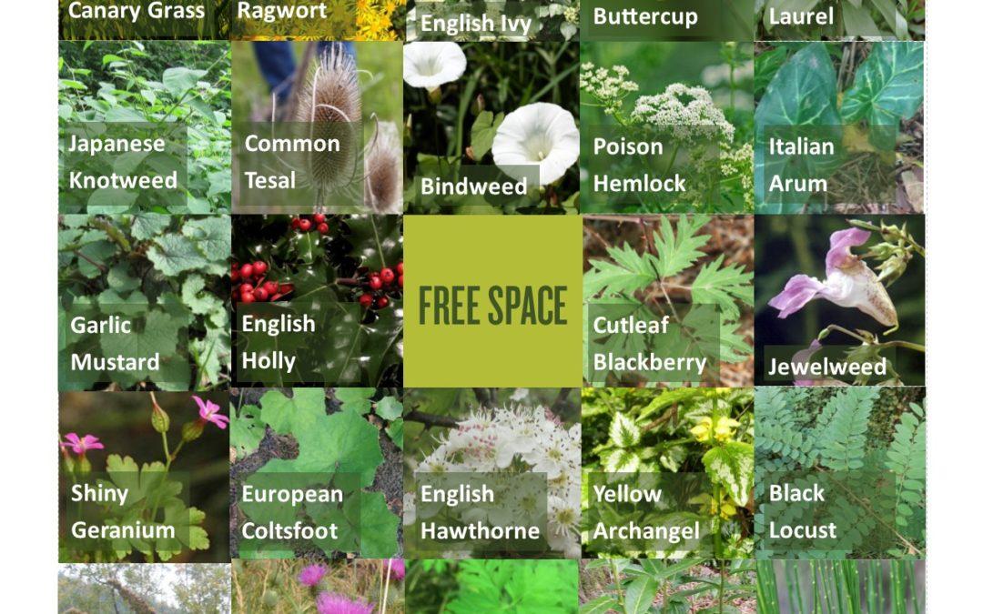 Invasive species awareness week 2019