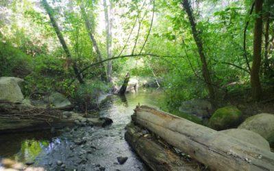 Habitat Highlight: Longfellow Creek