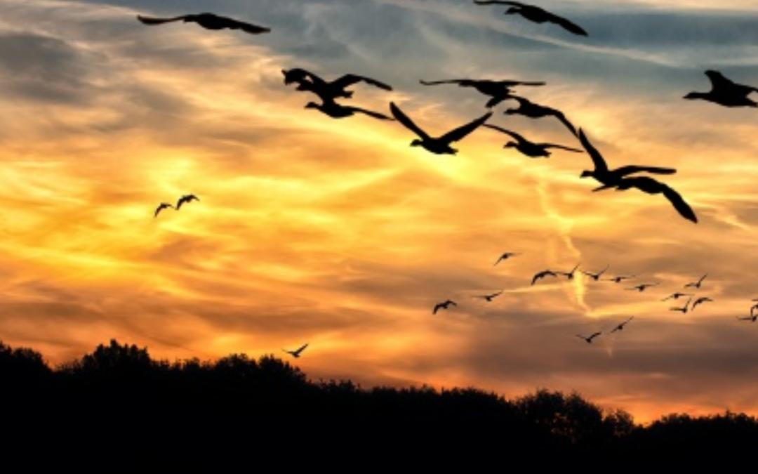 Adapting Stewardship to Adaptive Migrations