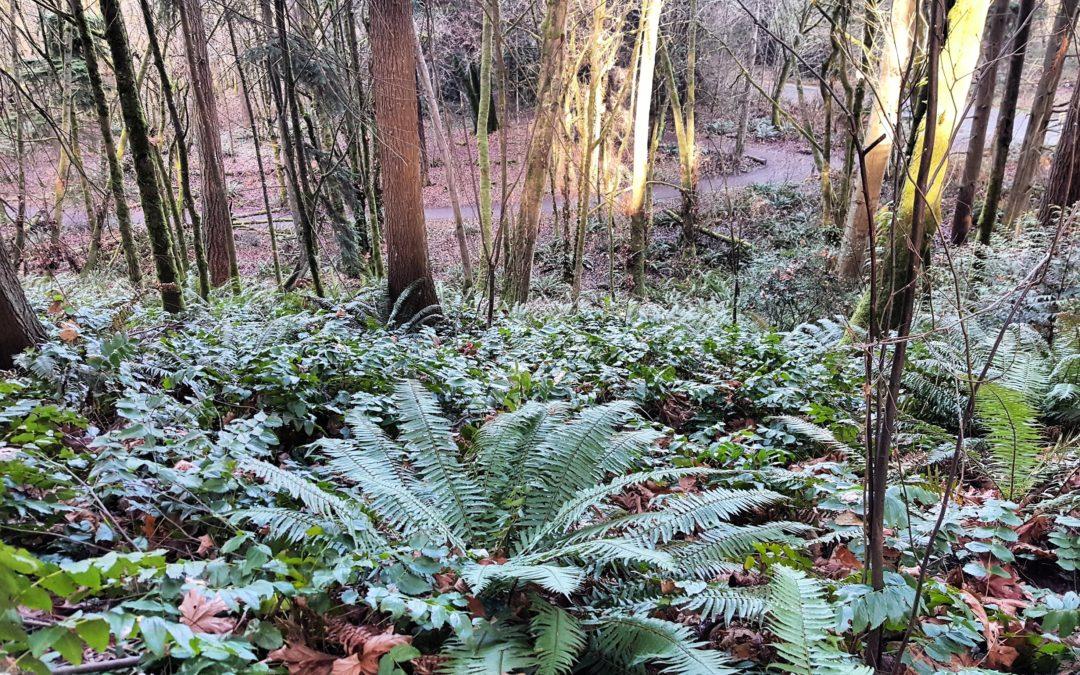 Seedling Survival in Seattle Parks