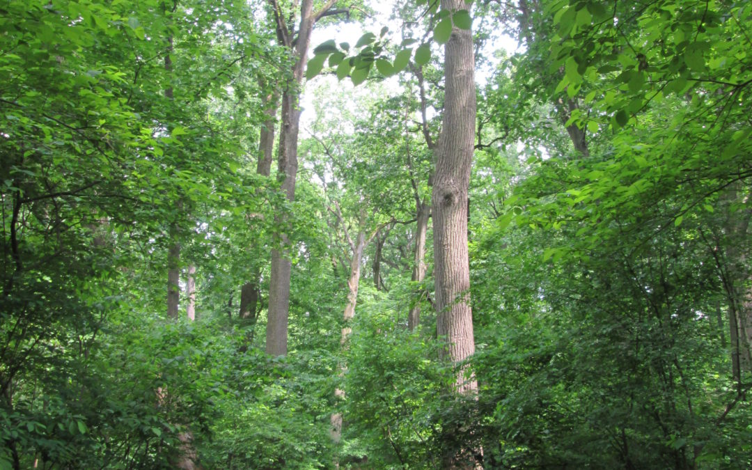 Seattle Joins 11 American Cities to Discuss Care of City Forests