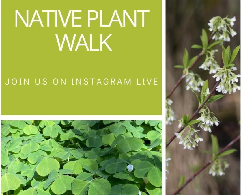 Live Plant Walks!