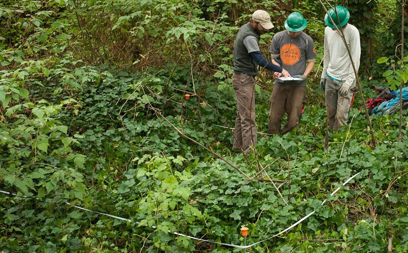 GSP Long-Term Monitoring Tells a Story of Improving Forest Health