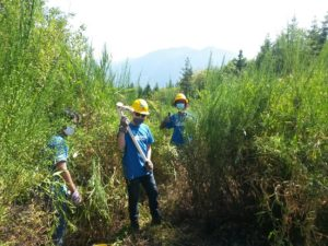 Removing invasive plants and trail building in the Cascades