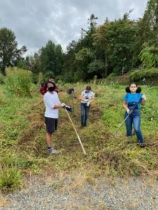 Youth crew with Tilth Alliance at a local farm.