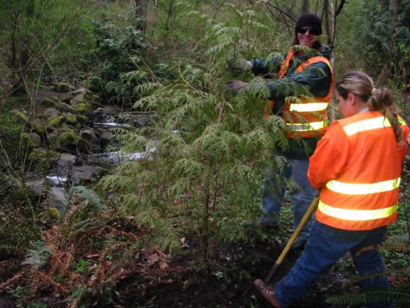 SCC working at Thornton Creek